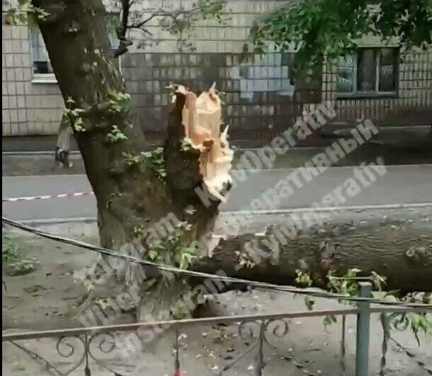Порыв ветра сломал дерево.