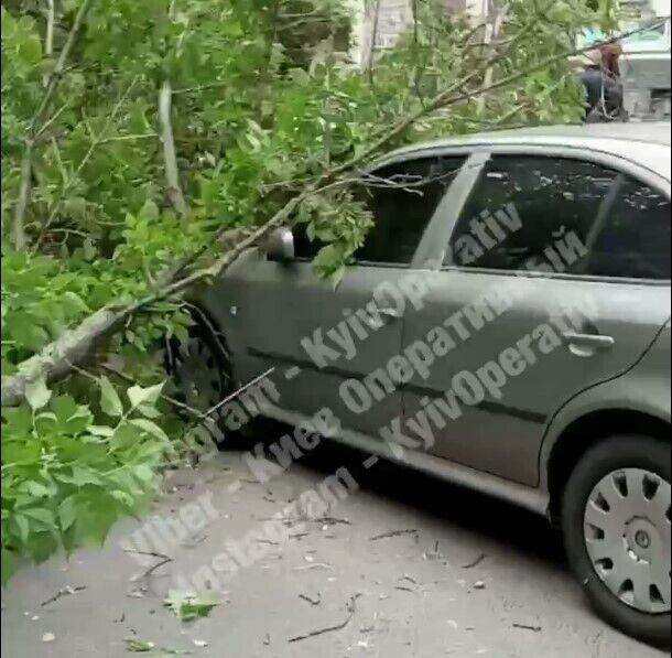 В результате происшествия пострадали авто и линия электропередач.