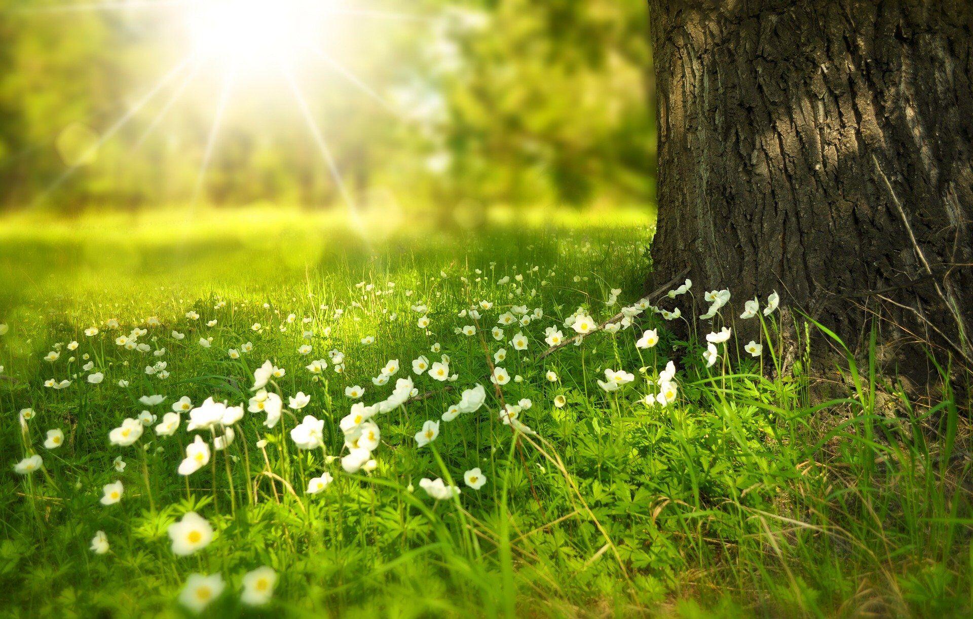21 июня нельзя шить, убирать, стирать, работать в саду и огороде