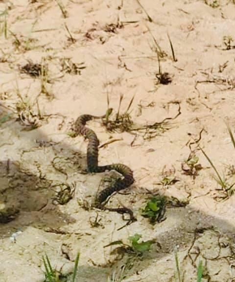 Змія на Азовському пляжі.