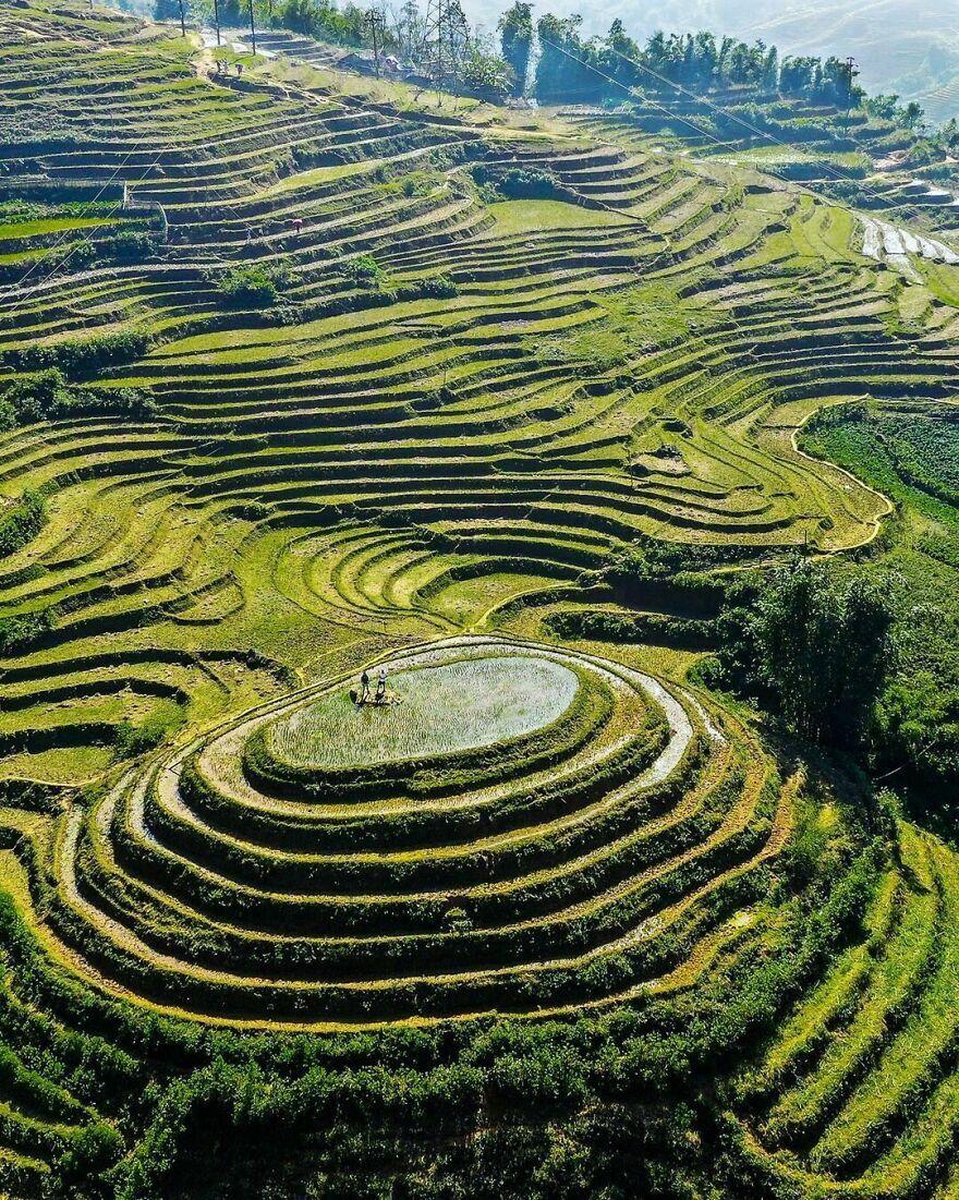 Окраины города Сапа во Вьетнаме засеяны рисом.