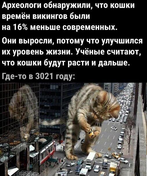 Мем о кошках