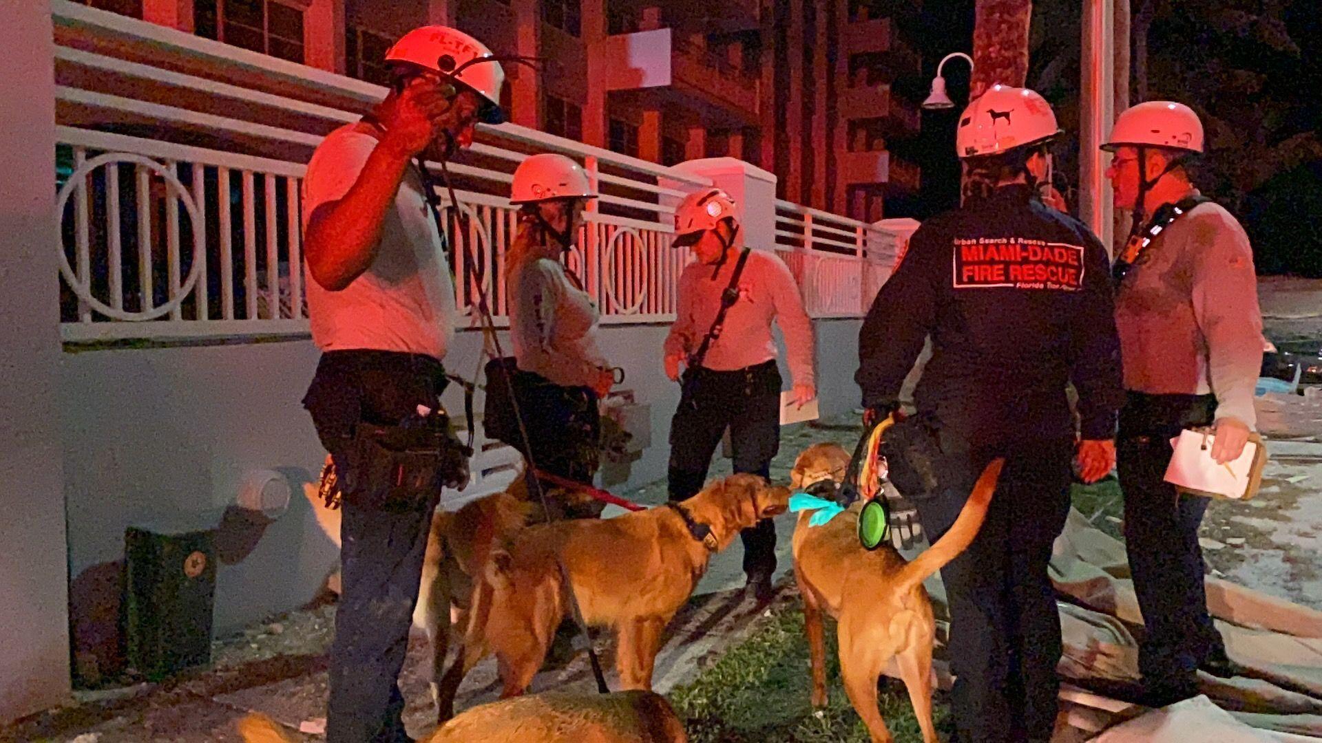 До рятувальної операції залучали собак