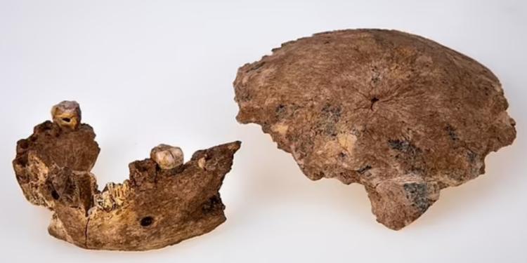 Рештки стародавньої людини