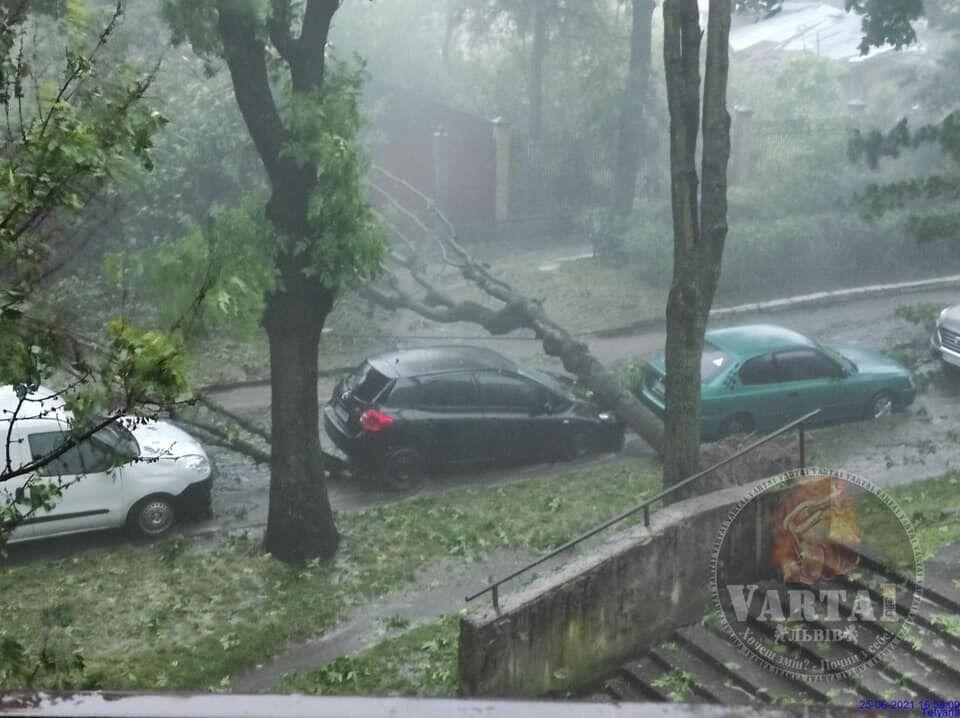 Поваленные деревья во Львове.