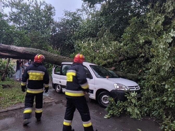 Ураган повалив дерева на автомобілі.