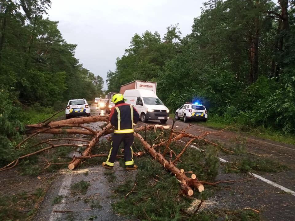 Повалені дерева заблокували трасу.