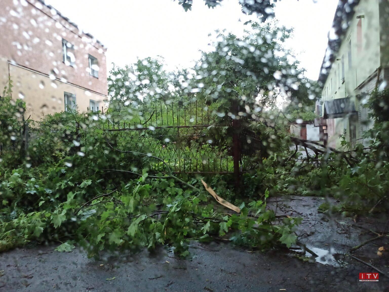 В Ривне ветер повалил деревья.