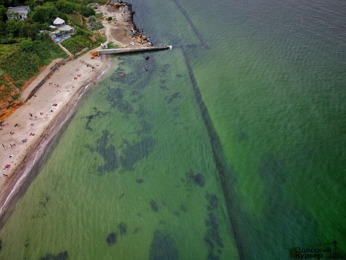 В Одессе зацвело море