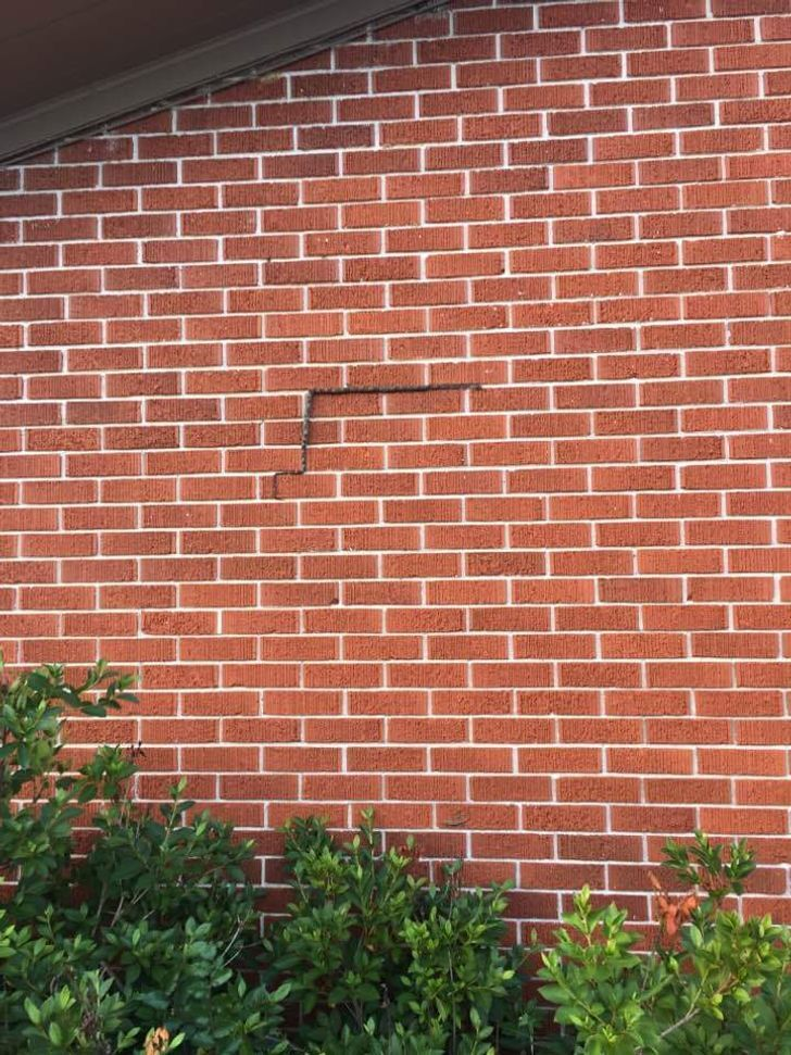Змея замаскировалась на стене дома.