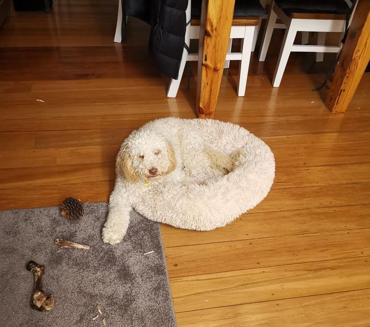 Пес сливается с подушкой.