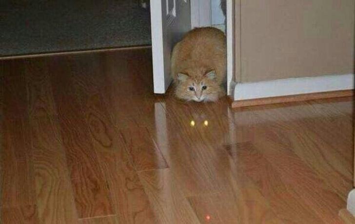 У кота светятся глаза