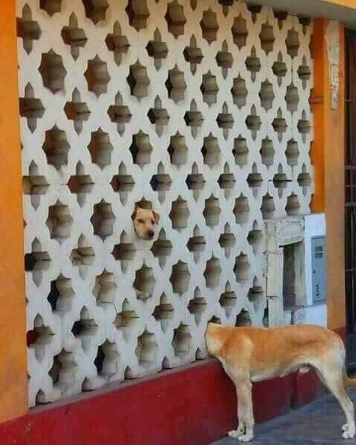 У собачки слишком длинная шея.