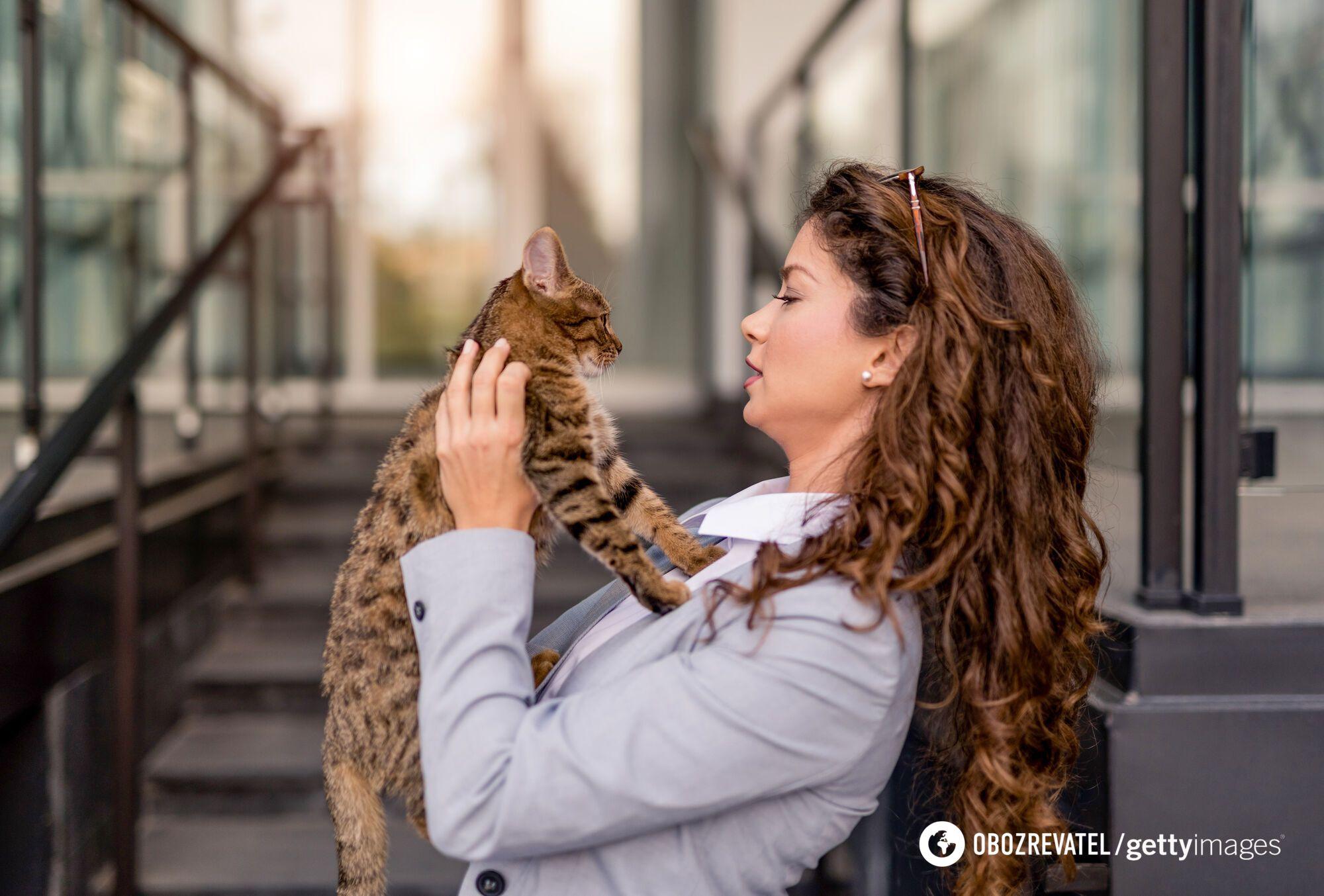 В дистанционных отношениях о кошках заботятся, но обычно они не являются близкими друзьями семьи