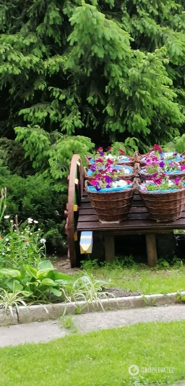 Двор на улице Менделеева женщина превратила в чудо-сад