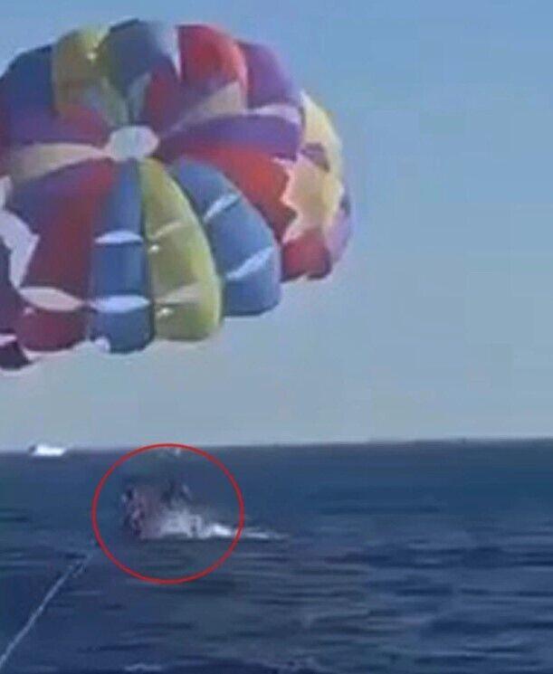 парапланеристы парили над водой, когда акула выскочила из воды и укусила одного из них за ногу