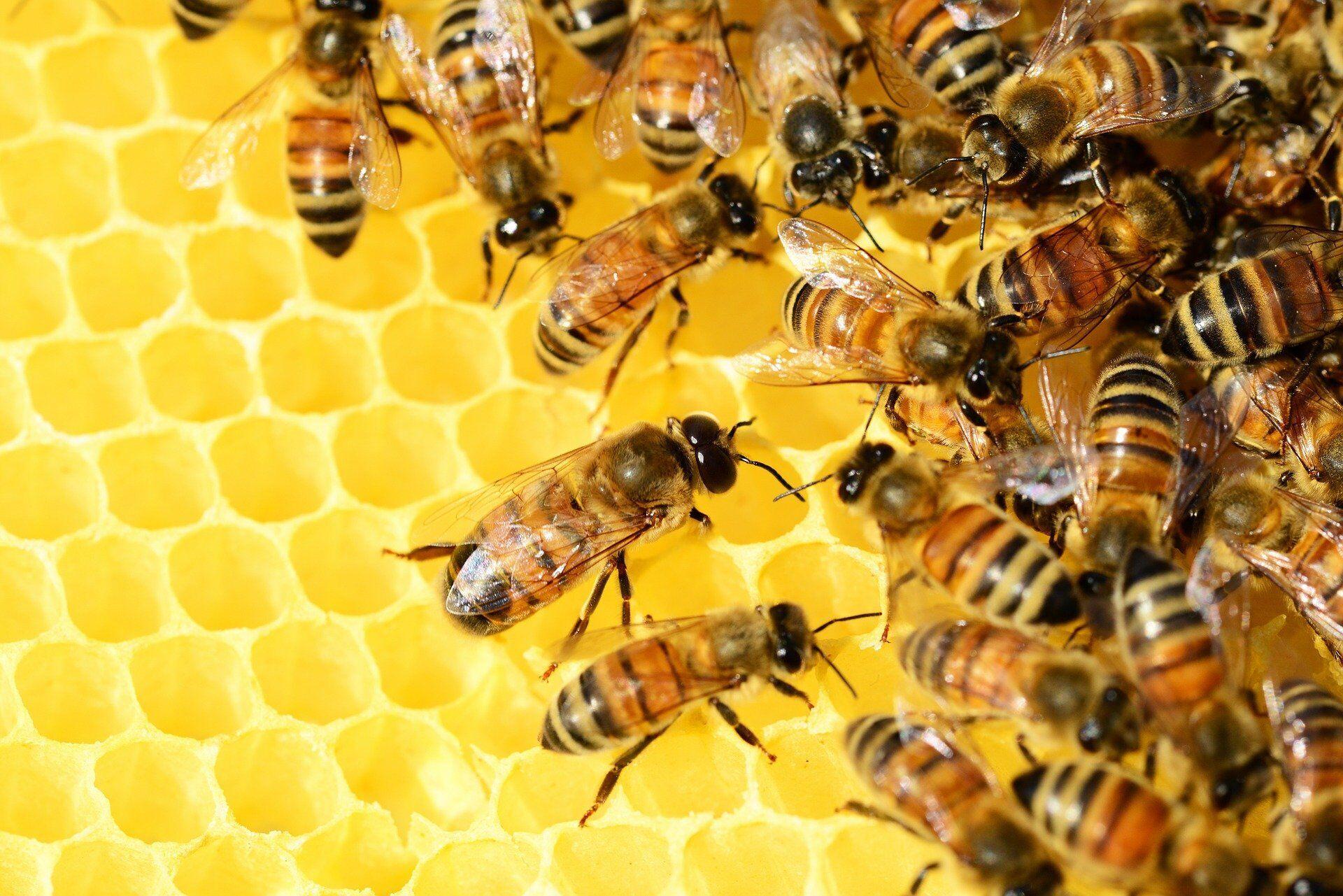 2 июля пчеловоды соблюдали особые традиции, чтобы сбор меда был удачным
