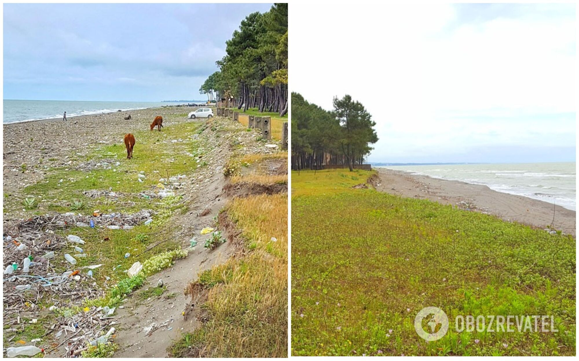 На пляжі практично завжди валяються пластикові пляшки, папір і пакети, а це приманює бездомних собак