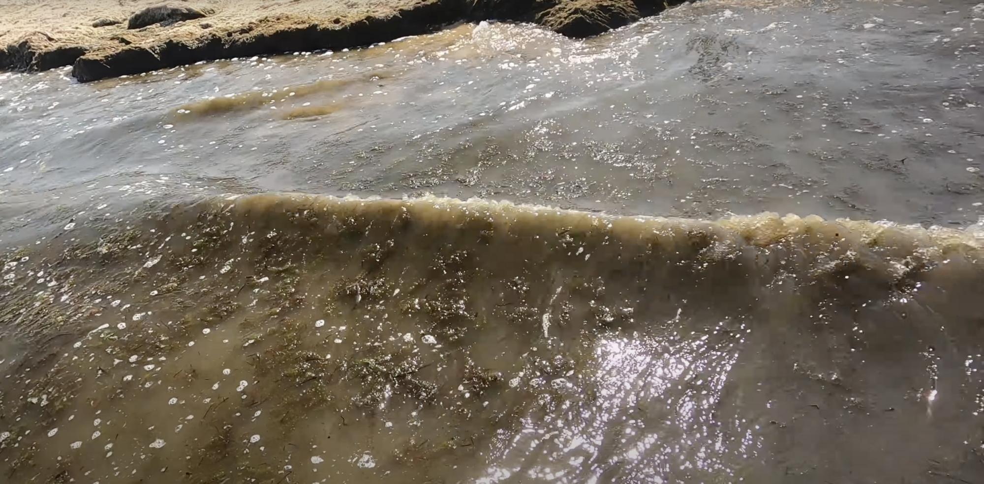 Вдоль берега куча водорослей.