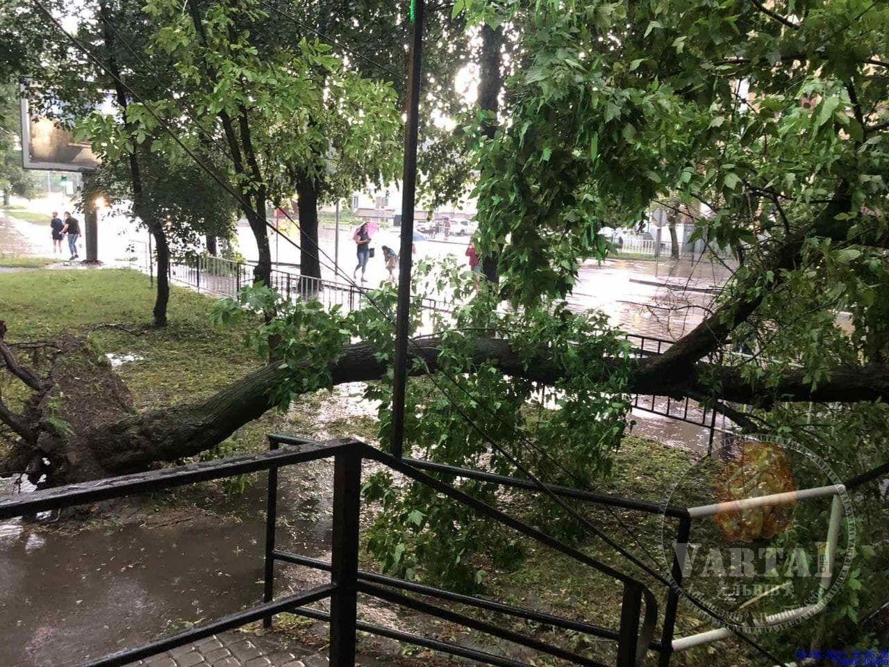 Повалені дерева у Львові