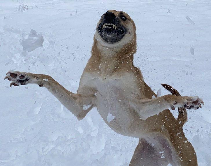 Нарешті сніг!