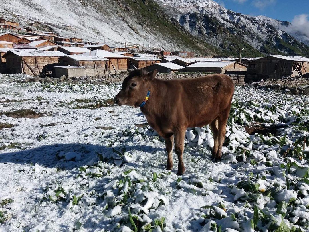 Толщина снежного покрова превысила 4 см.