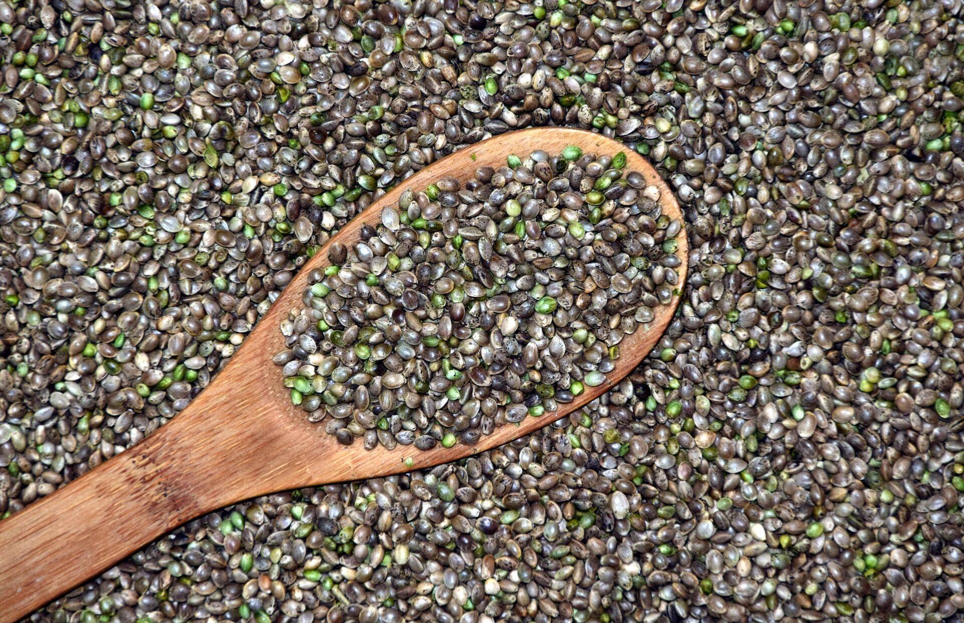Раньше люди сами добывали из конопли полезное растительное масло
