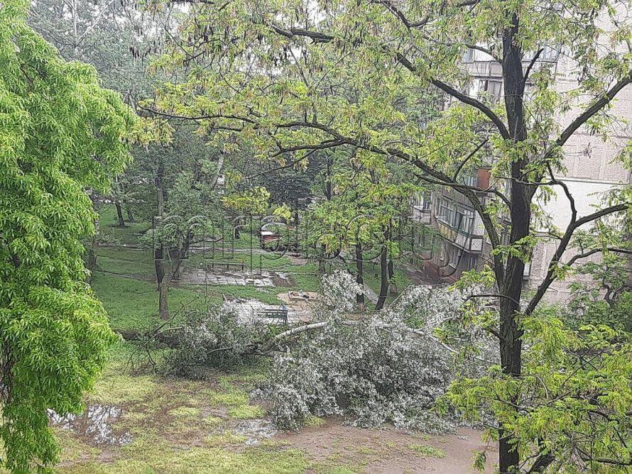 В некоторых районах упали деревья