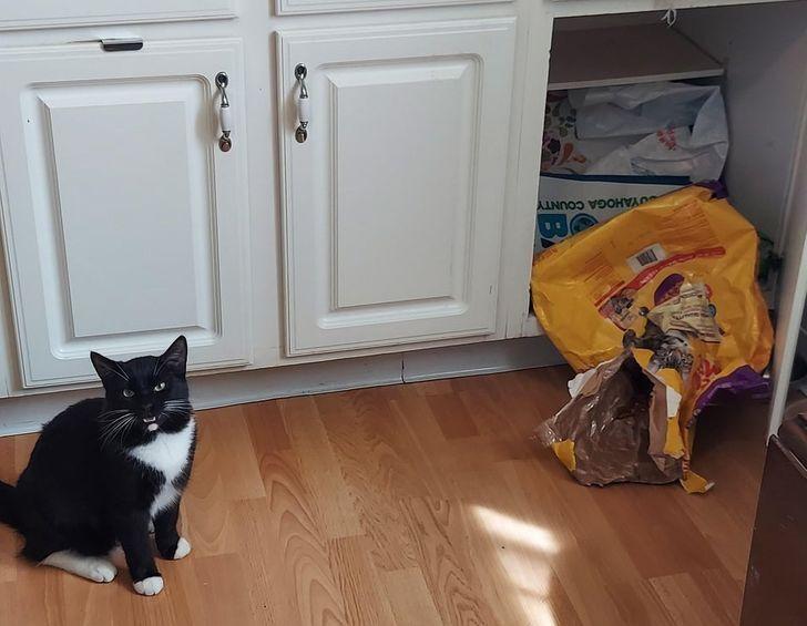 Кот съел целую пачку корма.