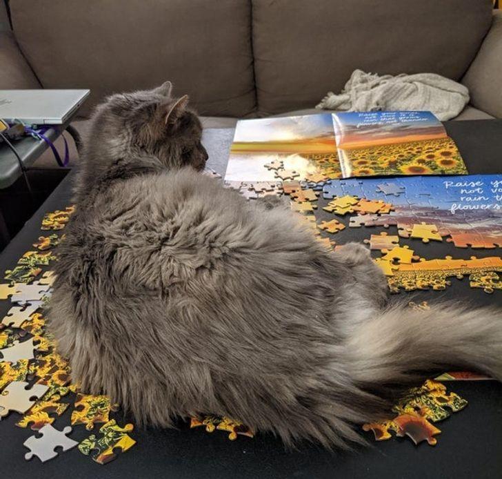 Кот улегся на картину с пазлами.