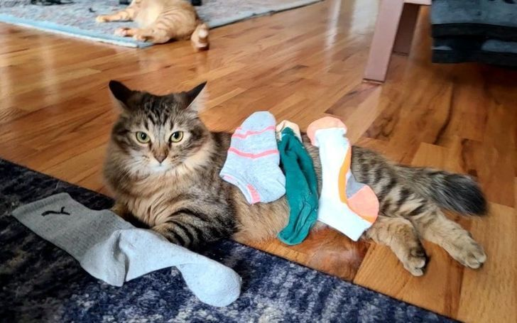 Кот ворует носки.
