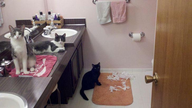 Коты застыли на месте преступления.