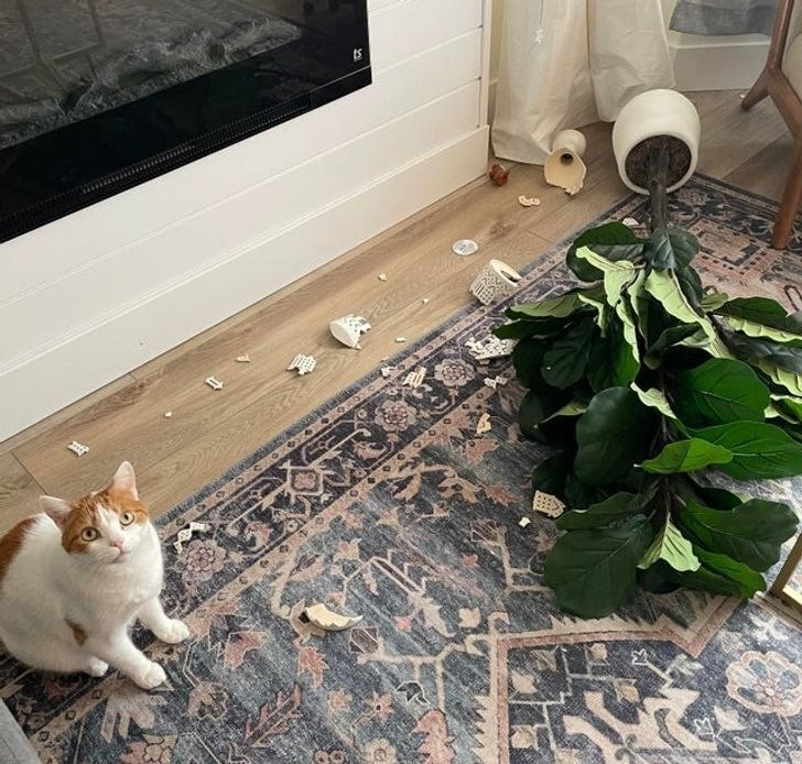 Кот разбил вазу.