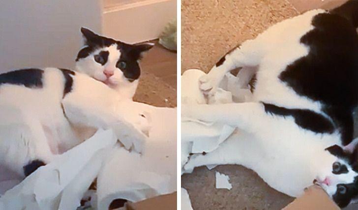 Кот показал, кто здесь хозяин.