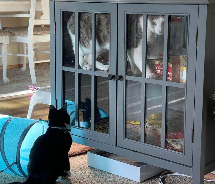 Котенок закрыл маму в серванте.