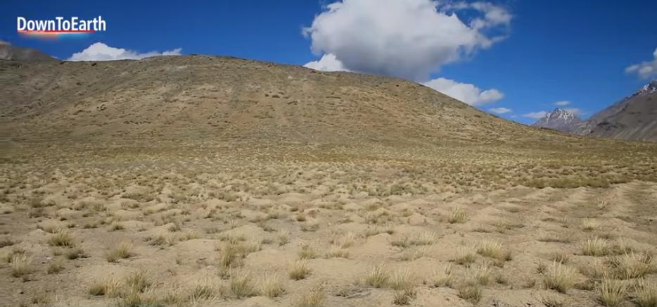 Неги превратил пустынный участок площадью 90 гектаров в оазис