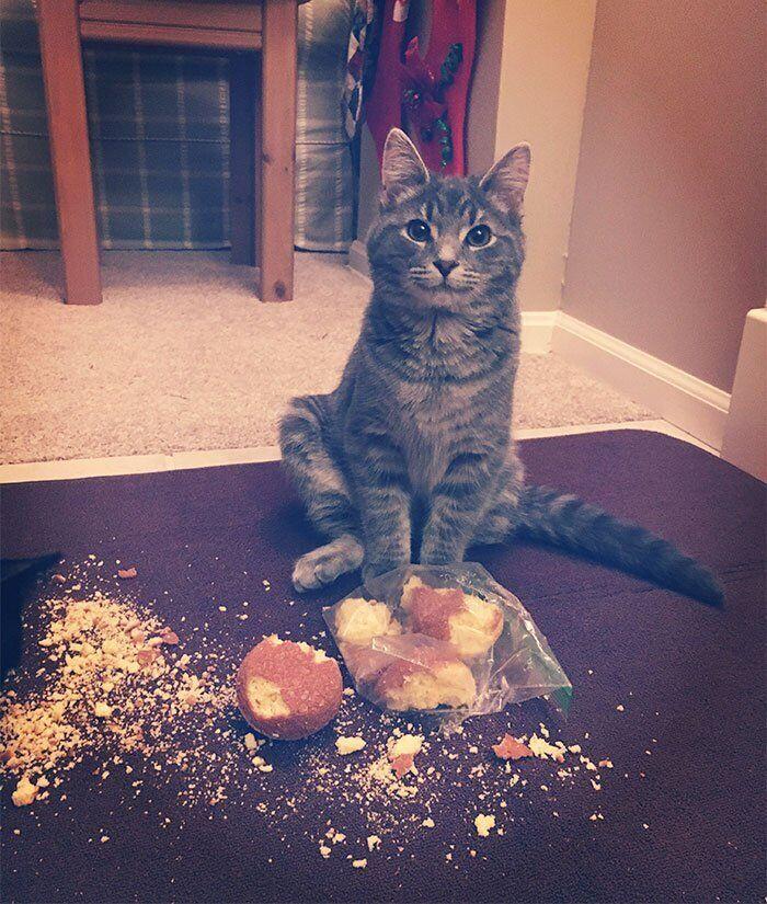Кот полакомился кексами.