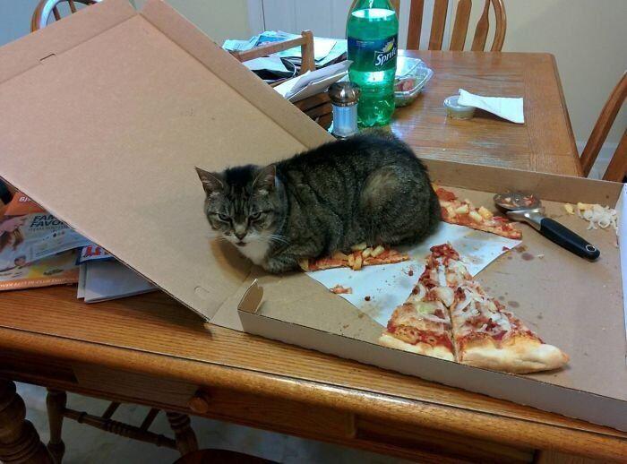 Кот забронировал кусок пиццы.