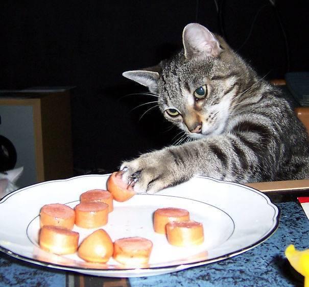 Сосиски – любимая вкусность всех котиков.