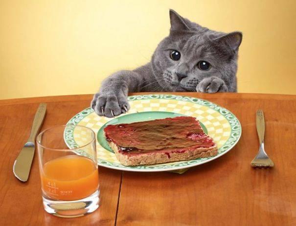 Котик хочет украсть бутерброд.