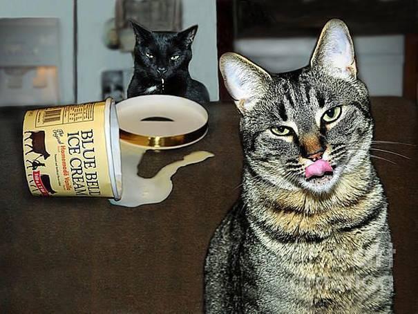 Коты полакомились мороженым.