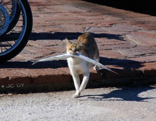 Кот сходил на рыбалку.