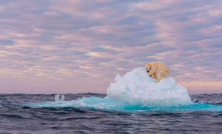 """Сокровище на льду"", автор Жмарек Яковски (Норвегия)"