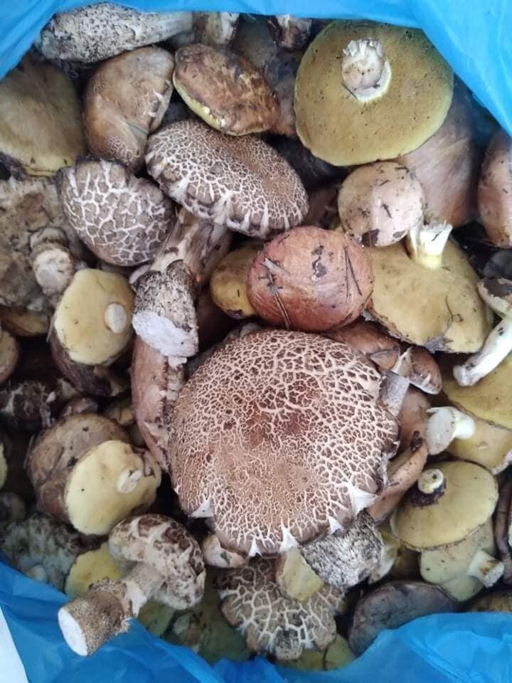 Сбор грибов в Буче