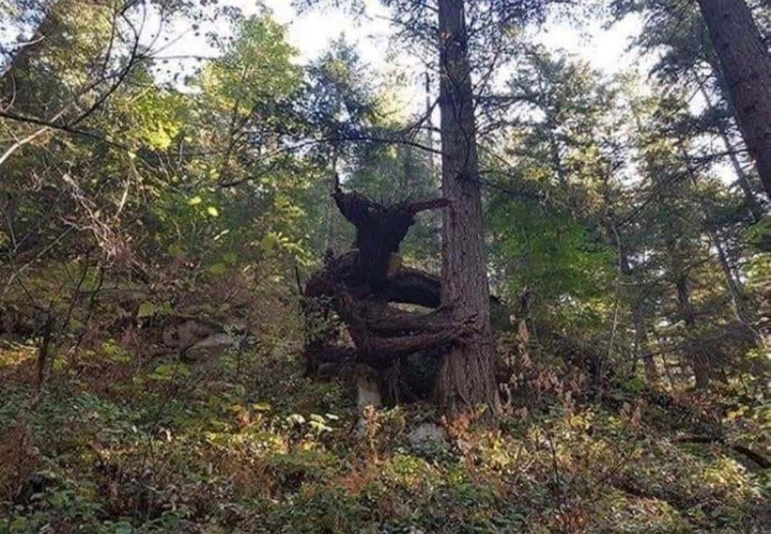 Странное дерево напугало пользователей