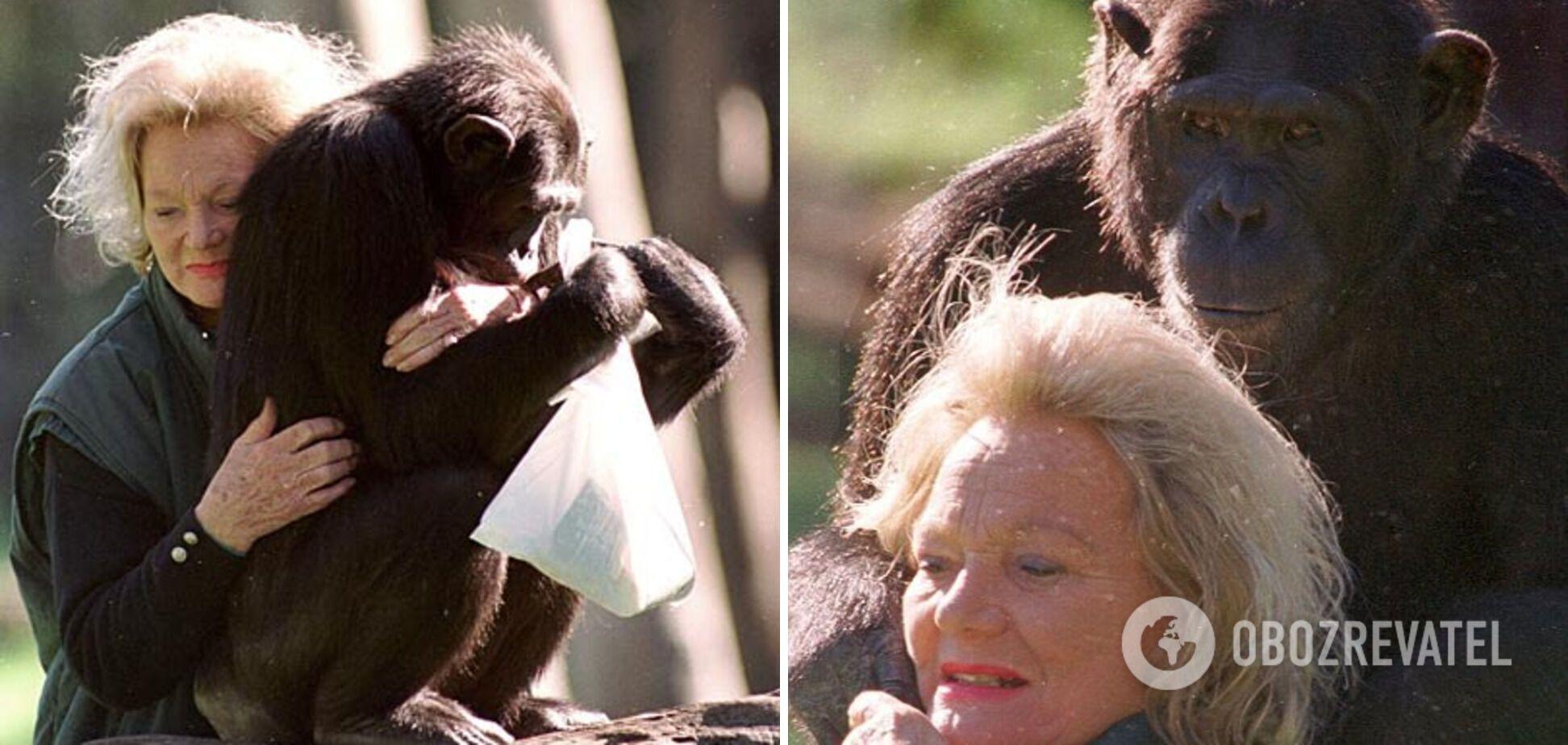 Мільйонерка залишила 70 млн доларів для шимпанзе.