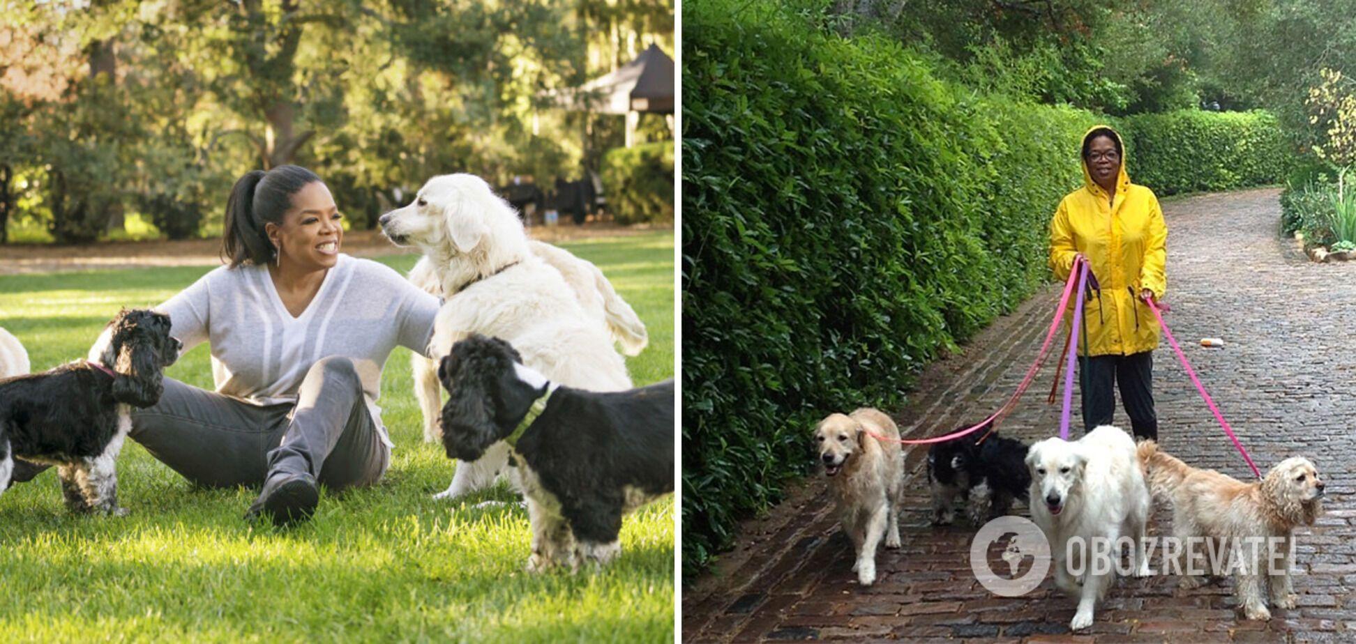 Опра Вінфрі залишить собакам свій будинок