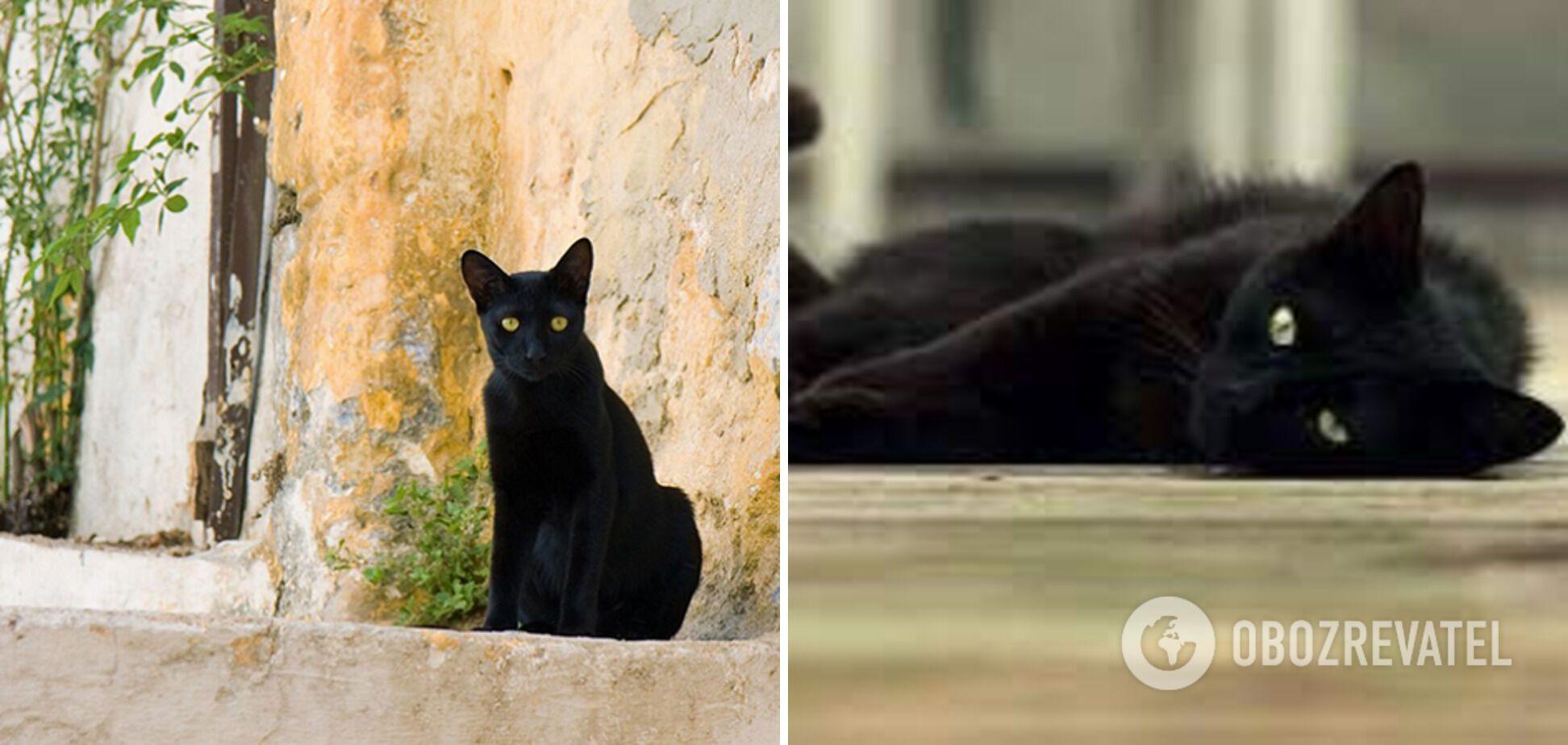Кіт Томмазо отримав квартири й автомобілі у спадок