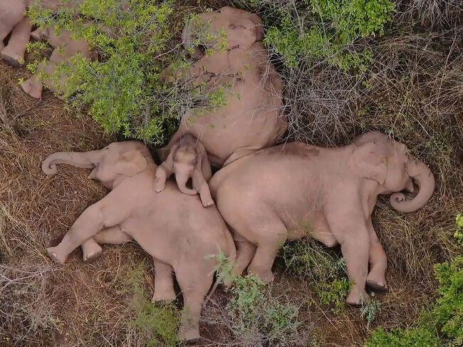 Фото сплячої групи зібрали 200 мільйонів переглядів