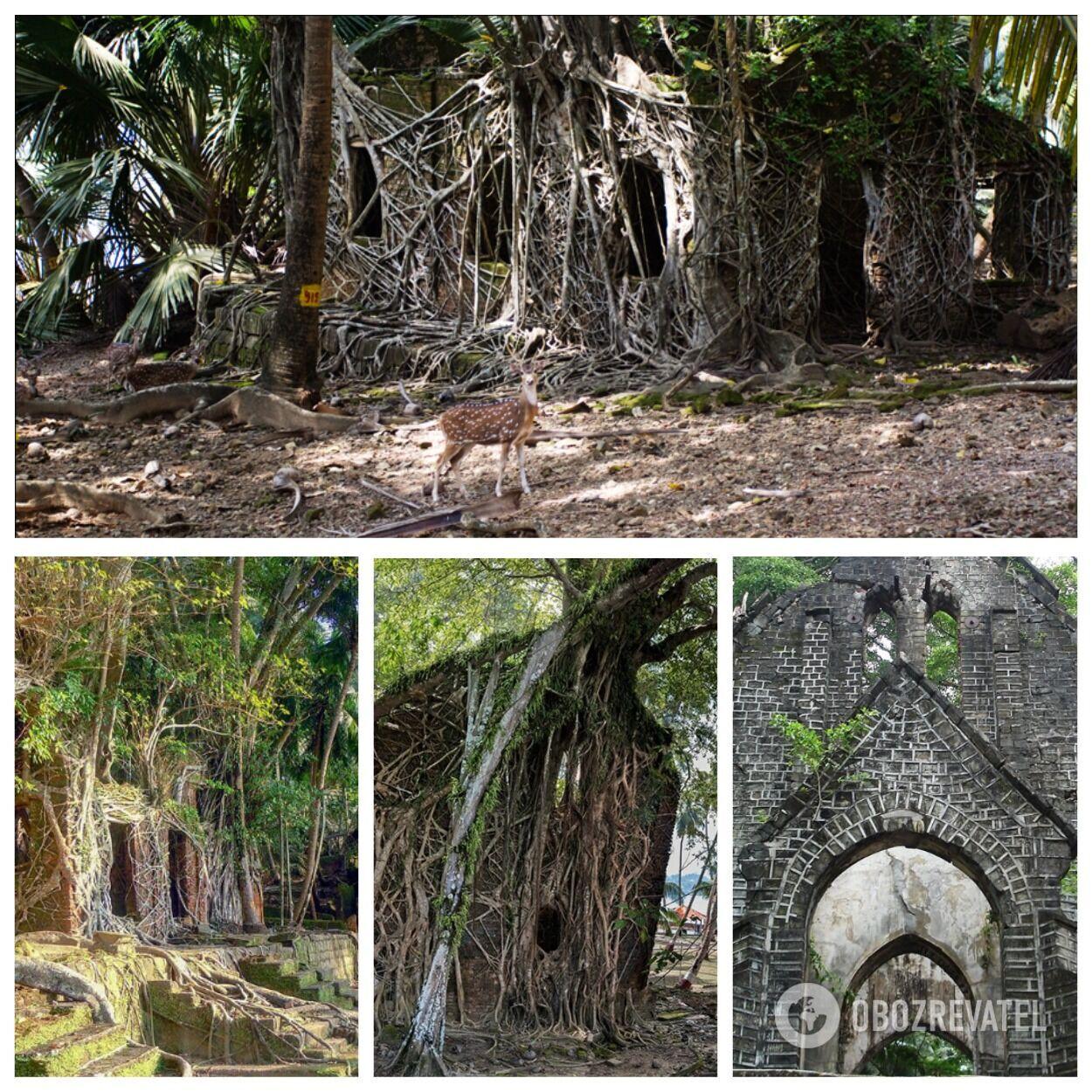 Остров Росс находится недалеко от столицы Андаманских островов в Индии